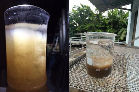 Quy trình nuôi cấy vi sinh hệ thống xử lý nước thải
